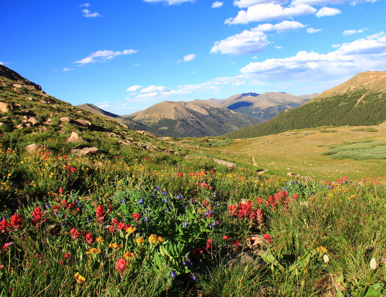 coloradowildflowers.JPG